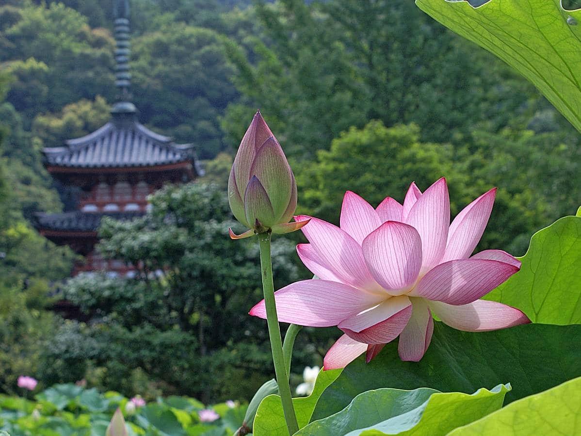 enso-en-el-budismo