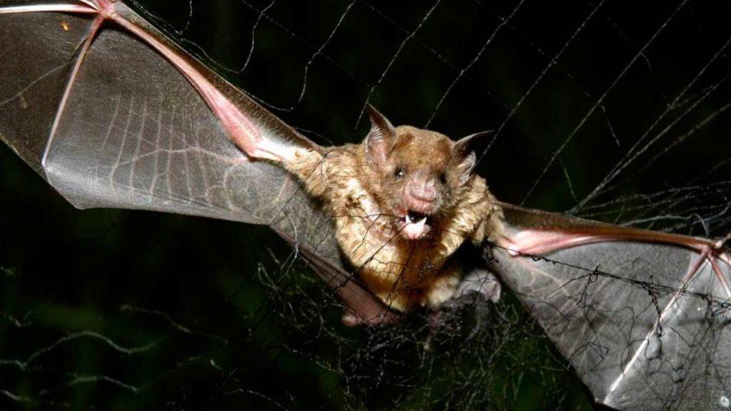 Leyenda del Murciélago